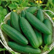 Marketmore (1.5 gr) seminte de castraveti soi semitardiv, lungime 20-22 cm, verde inchis, Agrosem