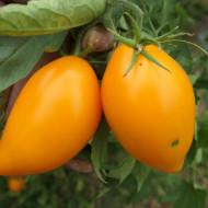 Melon (30 seminte) rosii gigant lungi, galbene-portocalii, nedeterminate, Ukraina