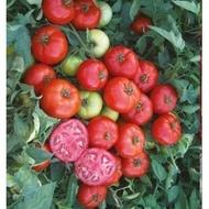 Meys F1 - 1000 sem - Seminte de rosii determinate ce prezinta productivitate mare ajungand la o greutate de 180-210gr/fruct de la Yuksel