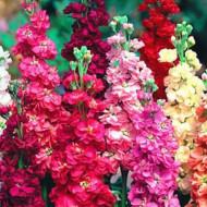 Mixandre mix (0,5 g), seminte de flori parfumate amestec de culori, Opal