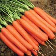 Morcovi Nantes (1 kg), seminte de morcovi soi semitimpuriu, Agrosem