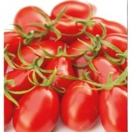 Nicoleta F1 - 100 sem - Seminte de tomate nedeterminate de tip cocktail cu fruct in forma de para de culoare rosu intens de la Yuksel