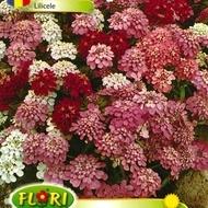 Papadie - Lilicele - Seminte flori Papadie de la Florian