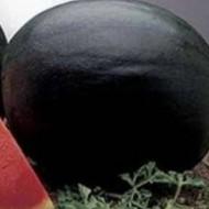 Perla Negra F1 - 1000 sem - Seminte de pepene verde cu vigoare medie si excelenta productie de fructe bine grupate ce se adapteaza la diferite conditii de mediu si la recoltarea tarzie in tunele de la Fito Semillas