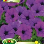 Petunie MOV - Seminte Flori Petunii Purple de la Florian
