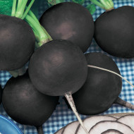 Ridichi de iarna Black Spanish Round (500 seminte), ridichi de iarna soi tardiv, radacini mari, Agrosem