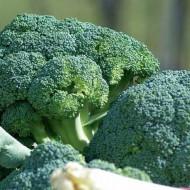 Ronny F1 - 1000 sem - Seminte de broccoli cu capatana densa grea si de culoare verde inchis care ajunge la maturitate in 80 de zile de la plantare ce poate fi usor de cultivat si de calitate de la Cora Seeds