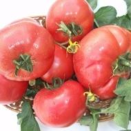 Rozalina Rossa F1 - 1 gr - Seminte de Tomate Semitimpurii bulgaresti de la GeosemSelect Bulgaria