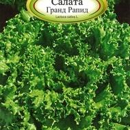 Salata GRAND RAPID - 3 gr - Seminte Salata Soi Timpuriu cu Frunze Buclate