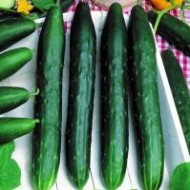 Seminte castraveti lungi Avangard F1 (1 gr), randament ridicat, gust excelent, Opal