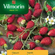 Seminte de Capsuni, soi cu productivitate ridicata cu fructe foarte gustoase, Vilmorin