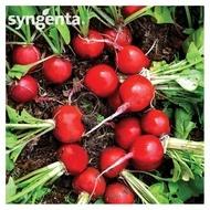 Seminte de ridichii Rondar F1 soi timpuriu (10000 seminte), rosu rotund, Syngenta