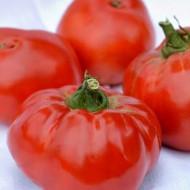 Seminte rosii Elisabeta (1 g), crestere nedeterminata, Agrosel