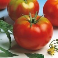 Seminte rosii Optima F1 (500 seminte), crestere nedeterminata, Seminis