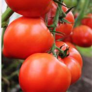 Seminte rosii Pekonet F1 (500 seminte), extratimpurii semidetermante, Syngenta