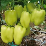 Soroksari tip dolma (4 gr) seminte ardei gras soi semitimpuriu, Agrosem
