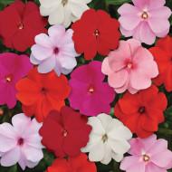 Sporul casei mix (0,1 g) seminte de flori Impatiens mix de culori, Opal