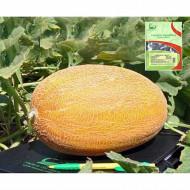 Tagus F1 (500 seminte) de pepene galben extratimpuriu tip ananas, Hazera