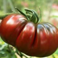 Tomate Russian Black (60 seminte) seminte tomate negre cu pulpa groasa, gust placut, Agrosem