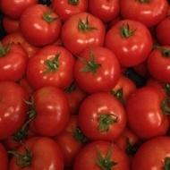 Vasanta F1 - 1000 sem - Seminte de tomate ce se remarca prin productivitate foarte ridicata si prin vigurozitate producand pana la 40-50 fructe/planta de la Rijk Zwaan