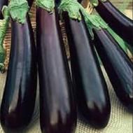 Vinete Long Purple (400 seminte), vinete soi timpuriu, culoare violet inchis, Agrosem