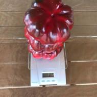 Ardei gogosar ZELENI rotund (1500 seminte) fructe foarte mari gigant, Superior