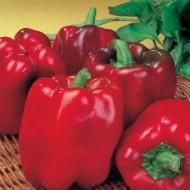 Ardei gras Asti Red (150 seminte), ardei gras soi italian timpuriu, fructe foarte mari, ideale umplut, Agrosem