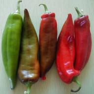 Ardei iute Anaheim (75 seminte), ardei iute semitimpuriu, consum proaspat sau conservat, Agrosem