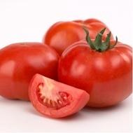 Axiom F1 - 500 sem - Seminte de rosii nedeterminate foarte gustos rezistenta la nematozi de la Nunhems