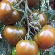Big Sacher F1 (132-283 F1) - 200 Seminte de rosii negre nedeterminate, pastrare indelungata, Yuksel