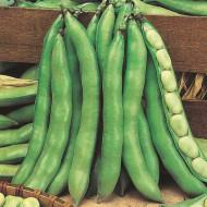 Bob Superaguadulce (20 g), seminte planta anuala boabe mari, dulci, Agrosem