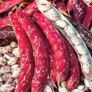 Borlotto Lingua di Fuoco (10 gr) seminte fasole pitica tarcata, Agrosem