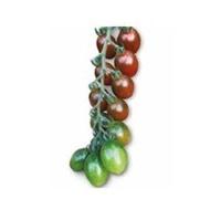 Brown cherry F1 172-857 (100 seminte), seminte de tomate nedeterminate, de culoare maro inchis forma ovala foarte gustos, Yuksel