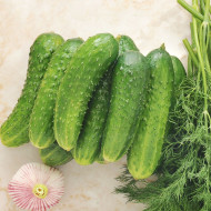 Castraveti cornison Delikates (1 kg), seminte de soi semitimpuriu fructe crocante, gustoase, Agrosem