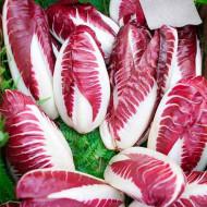 Cicoare Red Treviso (2 gr) seminte de salata soi Cicoare, Agrosem