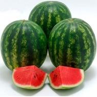 Crispeed F1 - 1000 sem - Seminte de pepene verde tip Crimson extra-timpuriu cu productie concentrata si plante viguroase ce confera siguranta culturii avand un procentaj ridicat de fructe de la Sakata