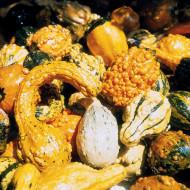 Dovleac decorativ amestec cu fructe mici (2 g), seminte de dovleac decorativ cu fructe mici, in diferite combinatii de forme si culori, Kertimag