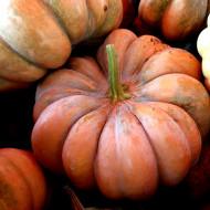 Dovleac Muscat de Provence (8 seminte), dovleac pulpa groasa, portocalie, gust placut, Agrosem