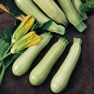 Ezra F1-100 gr.- seminte de dovlecei timpurii,netezi, culoare verde-crem,dim.10-14 cm.de la Hazera