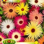 Floare de Cristal - Seminte Flori Floare de Cristal Mix de la Florian