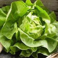 Hilde Salata verde – 10 gr – Seminte de Salata verde cu gust deosebit origine Olanda Pop Vriend