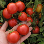 MARIENKA F1 seminte tomate (1000 sem) hibrid tomate de camp extratimpurii, foarte productive, Semo Cehia