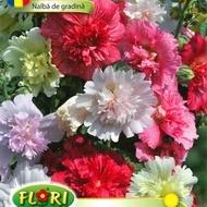 Nalba de Gradina Mix - Seminte Flori Nalba de Gradina de la Florian