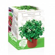 Nasturel - Kit plante aromatice