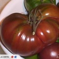 Negre de Tula (Black from Tula) – 1 gr – Seminte Tomate Negre de Tula Nedeterminate Mari Extratimpurii Soi Deosebit de Gustos