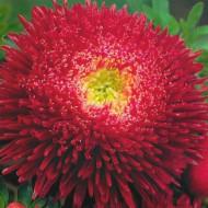Ochiul boului Princess rosu (0,4g), seminte de ochiul boului cu flori mari, deosebit de frumoase, rosii, Agrosem