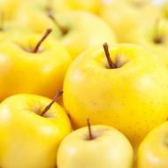Puiet de mar Golden Delicious, pom fructifer mar cu fructe aurii, dulci, parfumate, Yurta