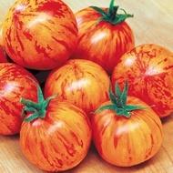 Rosii TIGERELLA - 0.5 gr - Soi timpuriu rotund gustos de culoare rosu intens cu dungi portocalii.