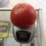 Rozova Maghia (5 gr) seminte tomate roze Magie Roz tip gigant bulgaresc, Opal
