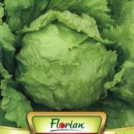 Salata Pierre Bénite - 3 gr - Seminte Salata Frunze Late de la Florian